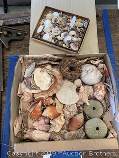 Very old ocean shells