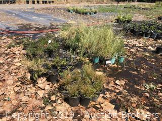 Deer Grass, Hawthorne, Silk Trees, Thyme, Sage, Oregon Grape